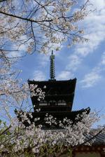 07331_sakura_pagoda_2021